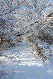Vandringsled i lantligt landskap för snöig skogvinter Arkivbild
