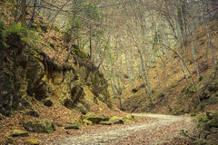 Vandringsled i skogen Royaltyfria Foton
