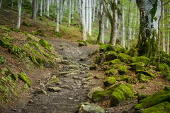 Vandringsled i skogen Arkivfoton