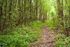 Vandringsled i skogen Arkivbild
