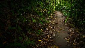 Vandringsled i skogen Arkivbilder