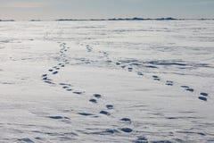 Vandringsled i snön royaltyfri fotografi