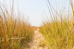 Vandringsled i torrt gräsfält Arkivbild
