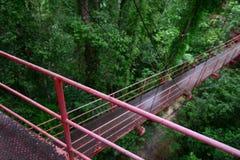 Vandringsled i vårskog Arkivbild