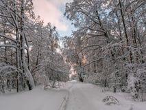 Vandringsled i vinterskogen arkivfoton