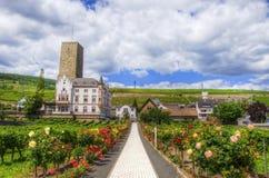 Vandringsled med blommor i Ruedesheim, Rhein-strömförsörjning-pfalz, Tyskland arkivfoton