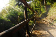 Vandringsled som fotvandrar slingan i skog Royaltyfri Fotografi