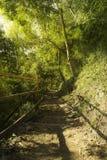 Vandringsled som fotvandrar slingan i skog- och ljussolnedgång Arkivfoton