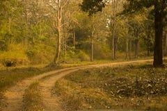 Vandringsled till och med en skog under nedgång eller höstsäsong royaltyfria foton