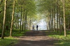 Vandringsled till och med grön skog av bokträdträd i vår med två personer som går hundkapplöpning i avståndet arkivbild
