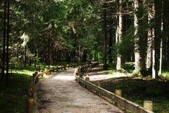 Vandringsled till och med skog Arkivbild