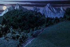 Vandringsled till och med skog på backen på natten Royaltyfria Foton