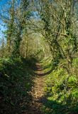 Vandringsled till och med typisk brittisk engelsk skogsmark i vår royaltyfri fotografi