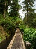 vandringsled till skogar royaltyfri fotografi