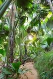 Vandringsledet gömma i handflatan in skogen Vallee de Mai Nature Reserve May Valley, ön av Praslin, Seychellerna arkivfoto