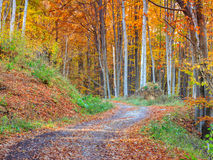 Vandringsledspolning till och med färgrik skog royaltyfri foto