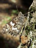 vanessa бабочки atlanta Стоковые Фото
