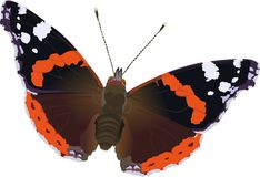 Vanessa atalanta. Butterfly, red admiral Stock Photo