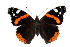 Vanessa atalanta (butterfly). Vanessa atalanta (butterfly on white Royalty Free Stock Photos