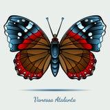 Vanessa Atalanta Butterfly Royalty Free Stock Image