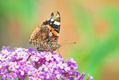 Vanessa-urticae Schmetterling Lizenzfreies Stockfoto