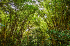 Vang与竹子的vieng自然 免版税库存照片