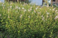 Vang heel wat gras en bloeiende foto's royalty-vrije stock afbeelding
