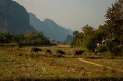 Vang Vieng石灰岩地区常见的地形风景 库存图片
