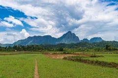 Vang Vieng, Лаос, взгляд, корова Стоковое Изображение RF