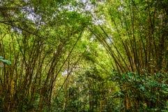 Vang vieng aard met bamboe Royalty-vrije Stock Foto