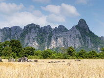 Vang Vieng karst mountains Royalty Free Stock Image