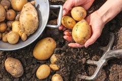Vanga della barra e della colapasta con le patate fresche immagine stock libera da diritti
