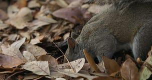 Vangate dello scoiattolo un foro archivi video