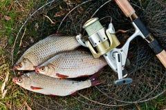 Vangend zoetwatervissen en hengels met de visserij van spoel Stock Fotografie