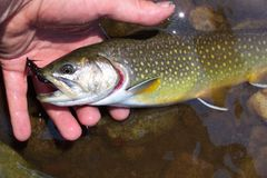 Vangst en Versie Stock Afbeeldingen