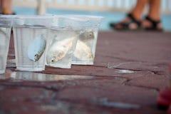 Vangst in glazen Stock Foto's