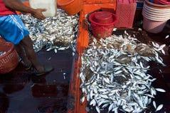 Vangst van de dag Royalty-vrije Stock Fotografie