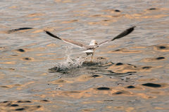 Vangst van de Dag Stock Foto's