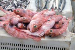 Vangst van de dag op een traditionele Marokkaanse markt in Essaouira, Marokko Afrika Stock Fotografie