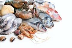 Vangst van vissen Stock Afbeelding