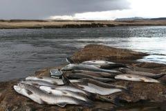 Vangst voor de dag Royalty-vrije Stock Foto's