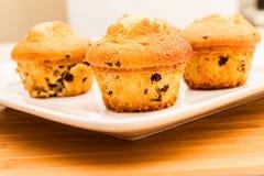 Vaniglia con i muffin di pepita di cioccolato Fotografia Stock