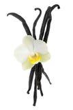Vaniglia con il fiore su bianco Fotografia Stock