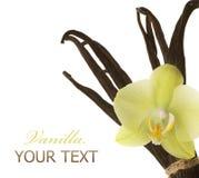 vanilj royaltyfria foton