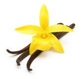 vanilj för blommaorchidfröskidor arkivfoto