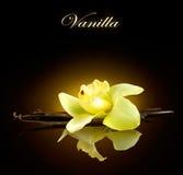 vanilj Fröskidor och blomma av vanilj arkivbild