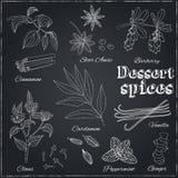 Vanilj kanel, barberry, kardemumma, vanilj, kryddnejlikor Royaltyfri Bild