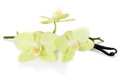 Vaniljfröskidor och blommaorchids royaltyfria foton