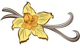 Vaniljblomma och vaniljfröskidor Arkivbild