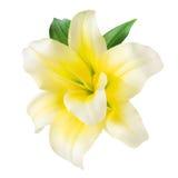 Vaniljblomma som isoleras på vit. Med den snabba banan Royaltyfri Bild